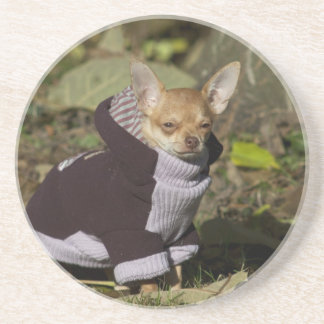 Fancy Chihuahua Drink Coaster