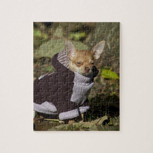 Fancy Chihuahua Jigsaw Puzzle