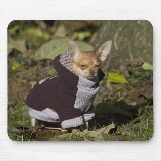 Fancy Chihuahua Mouse Pad