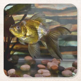 Fancy Fantail Goldfish Square Paper Coaster