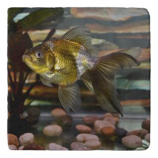 Fancy Fantail Goldfish Trivet