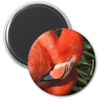 Fancy  Flamingo Magnet