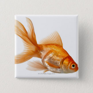 Fancy Goldfish Button