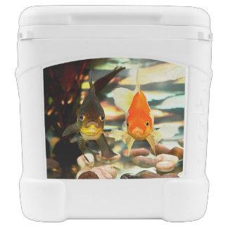 Fancy Goldfish Faces Watercolor Image Cooler