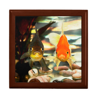 Fancy Goldfish Faces Watercolor Image Gift Box