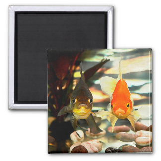 Fancy Goldfish Faces Watercolor Image Refrigerator Magnets
