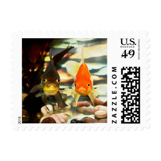 Fancy Goldfish Faces Watercolor Image Postage Stamp