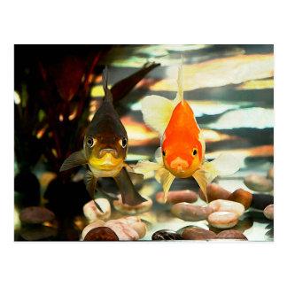 Fancy Goldfish Faces Watercolor Image Postcard