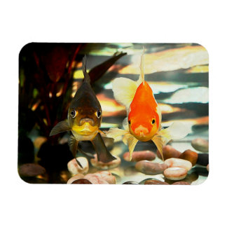 Fancy Goldfish Faces Watercolor Image Rectangular Magnets