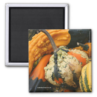 Fancy Gourds Nature Photo Magnet