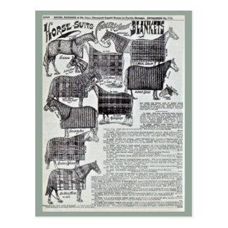 Fancy Horse Blankets Postcard