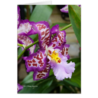 Fancy Lady Orchid Greeting Card