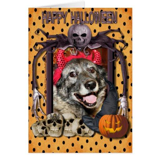Fancy - Norwegian Elkhound - Salsman Card