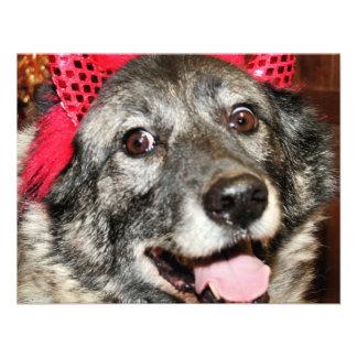 Fancy - Norwegian Elkhound - Salsman Invites