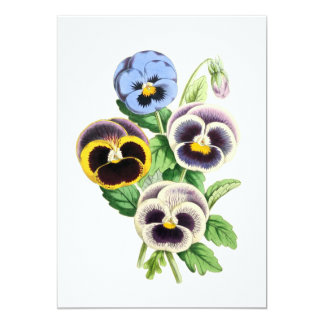 Fancy Pansies Vintage Illustration Card