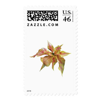 Fancy Pink and Yellow Poinsettia Stamp