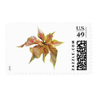 Fancy Pink and Yellow Poinsettia Postage Stamp