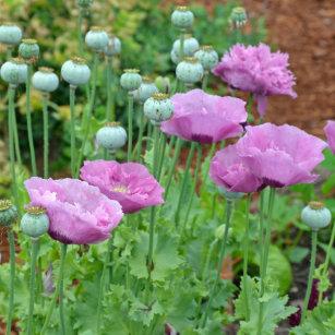 Purple poppy flower ornaments keepsake ornaments zazzle fancy purple poppies christmas ornament mightylinksfo