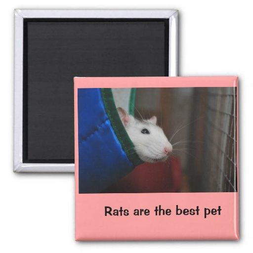 Fancy rat magneter för kylskåp