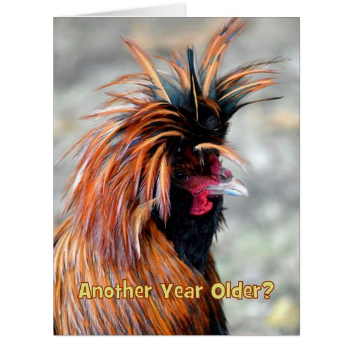 Fancy Rooster Happy Birthday Humor BIG SIZE Card