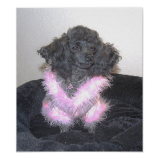 Fancy Toy Poodle in Pink bling Print