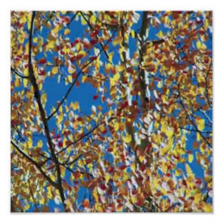 Fancy Wall Decorations Colorful Fall Leaf Leaves Poster