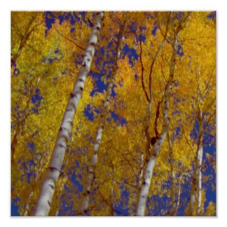 Fancy Wall Decorations Colorful fall tree colors Poster