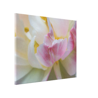 Fancy White and Pink Tulip Wrapped Canvas Print