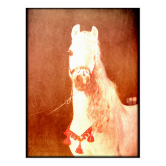 Fancy White Circus Pony Vintage Gypsy Style Postcard