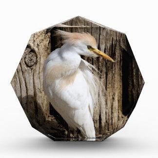 Fancy White Egret Award