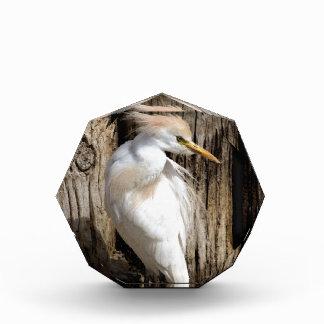 Fancy White Egret Acrylic Award