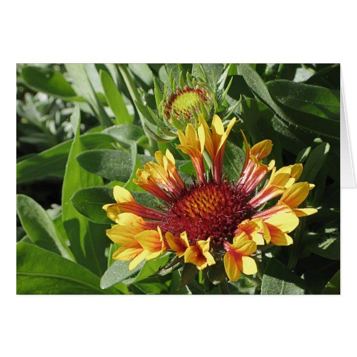 Fanfare Blanket Flower Card