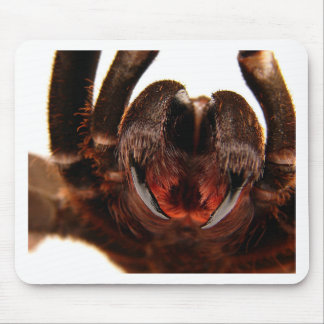 Fangs - Tarantula Art Image 2 Mouse Pad