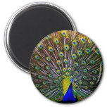 Fanning Peacock - Round 2 Inch Round Magnet