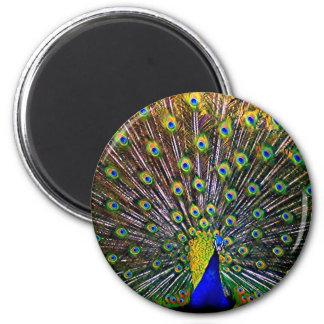 Fanning Peacock - Round Fridge Magnets