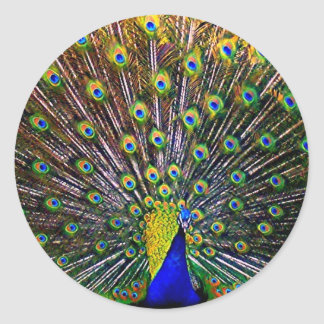 Fanning Peacock Classic Round Sticker