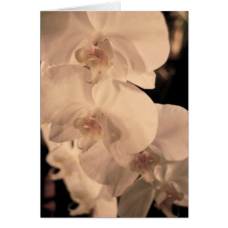 Fanny's Orchid Card