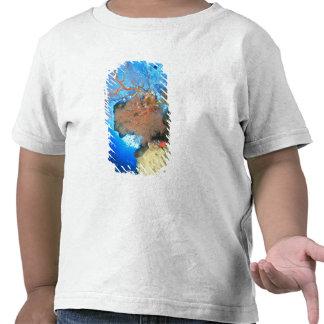 Fans de mar de Gorgonian isla de Gunung Api Band Camisetas