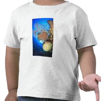 Fans de mar de Gorgonian isla de Gunung Api Band Camiseta
