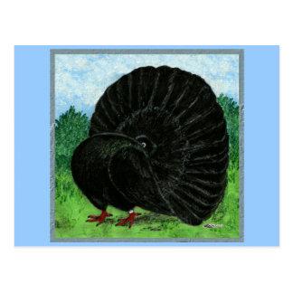 Fantail:  Black Postcard