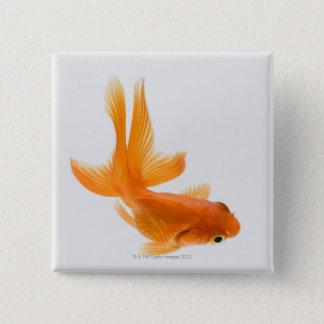 Fantail goldfish (Carassius auratus) 2 Pinback Button