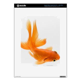 Fantail goldfish (Carassius auratus) 2 iPad 3 Skin