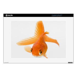 Fantail goldfish (Carassius auratus) Decal For Laptop
