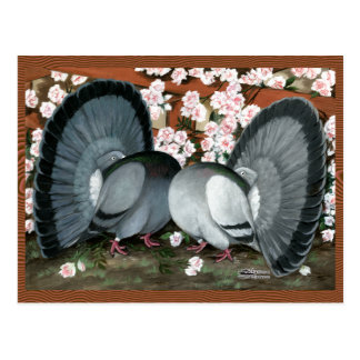 Fantail Pigeons Matched Pair Postcard