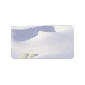 Fantasma de la duna etiqueta de dirección