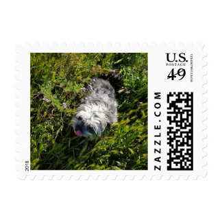 FANTASTIC FANNY THE POMAPOO ON POSTAGE STAMPS