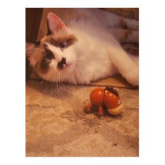 Fantastic Fifi the Ragdoll cat Card