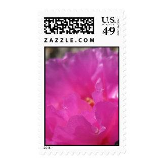 Fantastic Fuschia (5) Postage Stamps