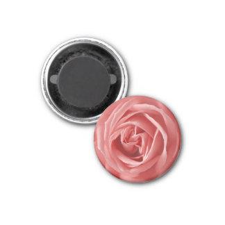 fantastic pink rose fridge magnet