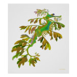 Fantasy Colored Leafy Sea Dragon Poster